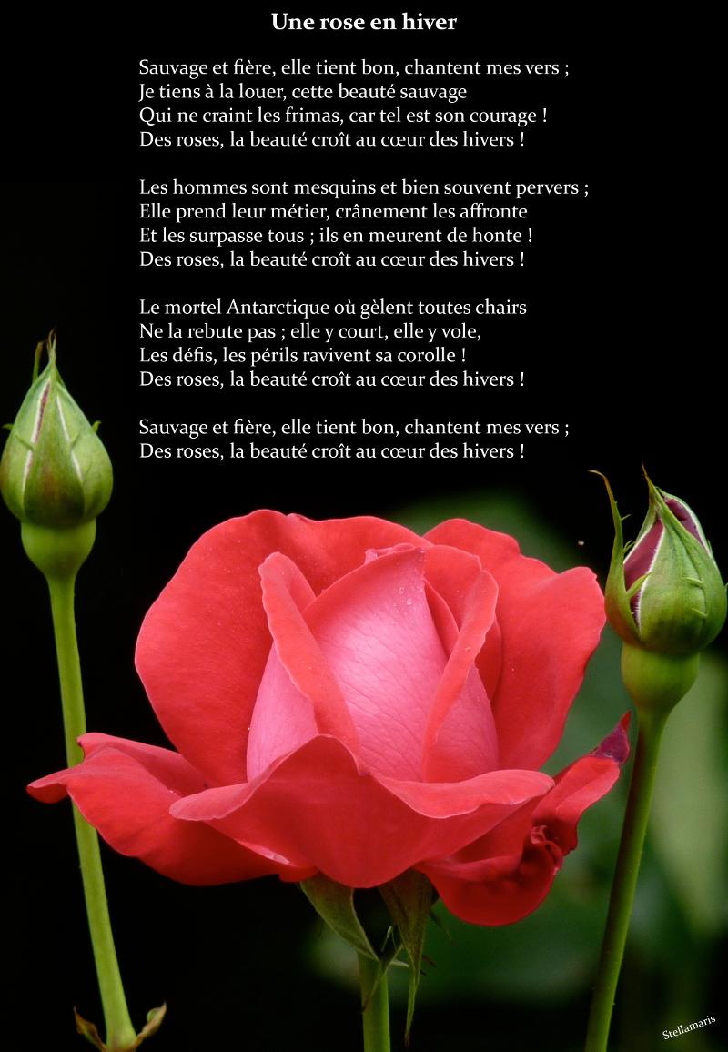 Une rose en hiver / / Sauvage et fière, elle tient bon, chantent mes vers ; / Je tiens à la louer, cette beauté sauvage / Qui ne craint les frimas, car tel est son courage ! / Des roses, la beauté croît au cœur des hivers ! / / Les hommes sont mesquins et bien souvent pervers ; / Elle prend leur métier, crânement les affronte / Et les surpasse tous ; ils en meurent de honte ! / Des roses, la beauté croît au cœur des hivers ! / / Le mortel Antarctique où gèlent toutes chairs / Ne la rebute pas ; elle y court, elle y vole, / Les défis, les périls ravivent sa corolle ! / Des roses, la beauté croît au cœur des hivers ! / / Sauvage et fière, elle tient bon, chantent mes vers ; / Des roses, la beauté croît au cœur des hivers ! / / Stellamaris