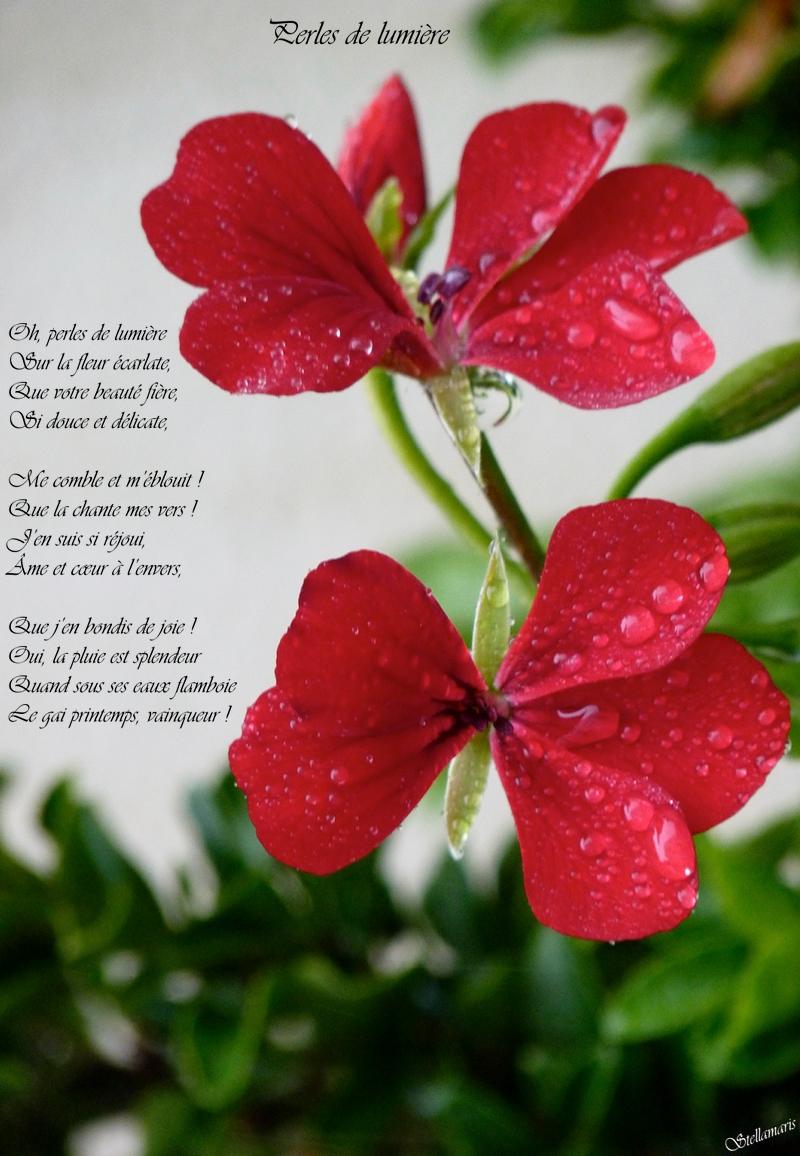 Perles de lumière / / Oh, perles de lumière / Sur la fleur écarlate, / Que votre beauté fière, / Si douce et délicate, / / Me comble et m'éblouit ! / Que la chante mes vers ! / J'en suis si réjoui, / Âme et cœur à l'envers, / / Que j'en bondis de joie ! / Oui, la pluie est splendeur / Quand sous ses eaux flamboie / Le gai printemps, vainqueur ! / / Stellamaris