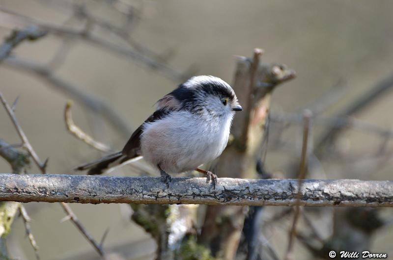 oiseaux de mon jardin Dpp_-oiseaux-3--0021-418ee54