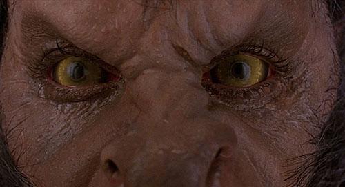 Le loup-garou de Londres Titre original An American Werewolf in London E-et-cie-loup-gar...ondres05-3f28df1