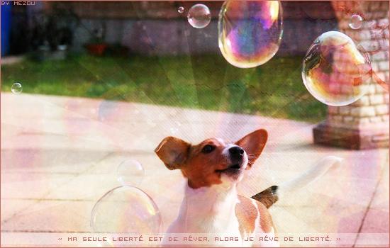 [Résultats] Bannière sur les chiens Chien-3f51dd9
