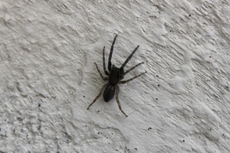 Des araignées Img_2124-1--3fe9440