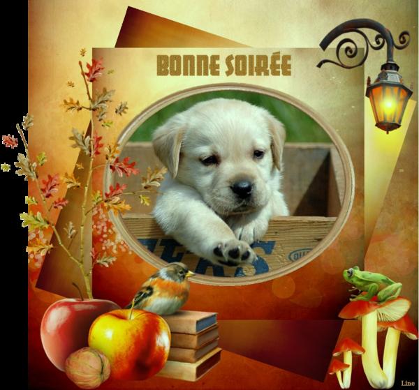 BONNE SOIRÉE DU LUNDI 03 FEVRIER 2f371576-43b5177